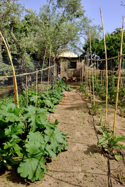 our veggies baxè